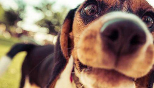 Wie Hunde Gerüche wahrnehmen
