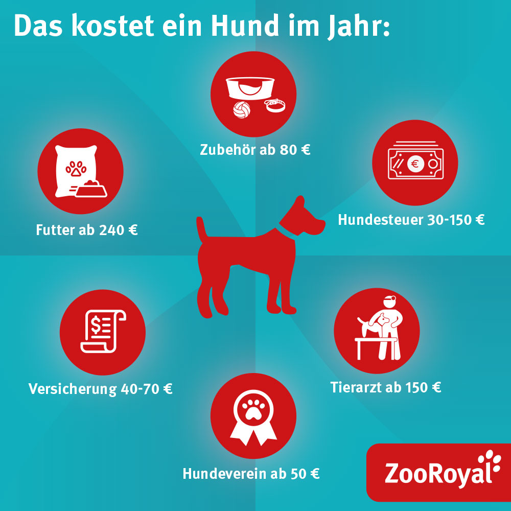 Kosten Hund Infografik