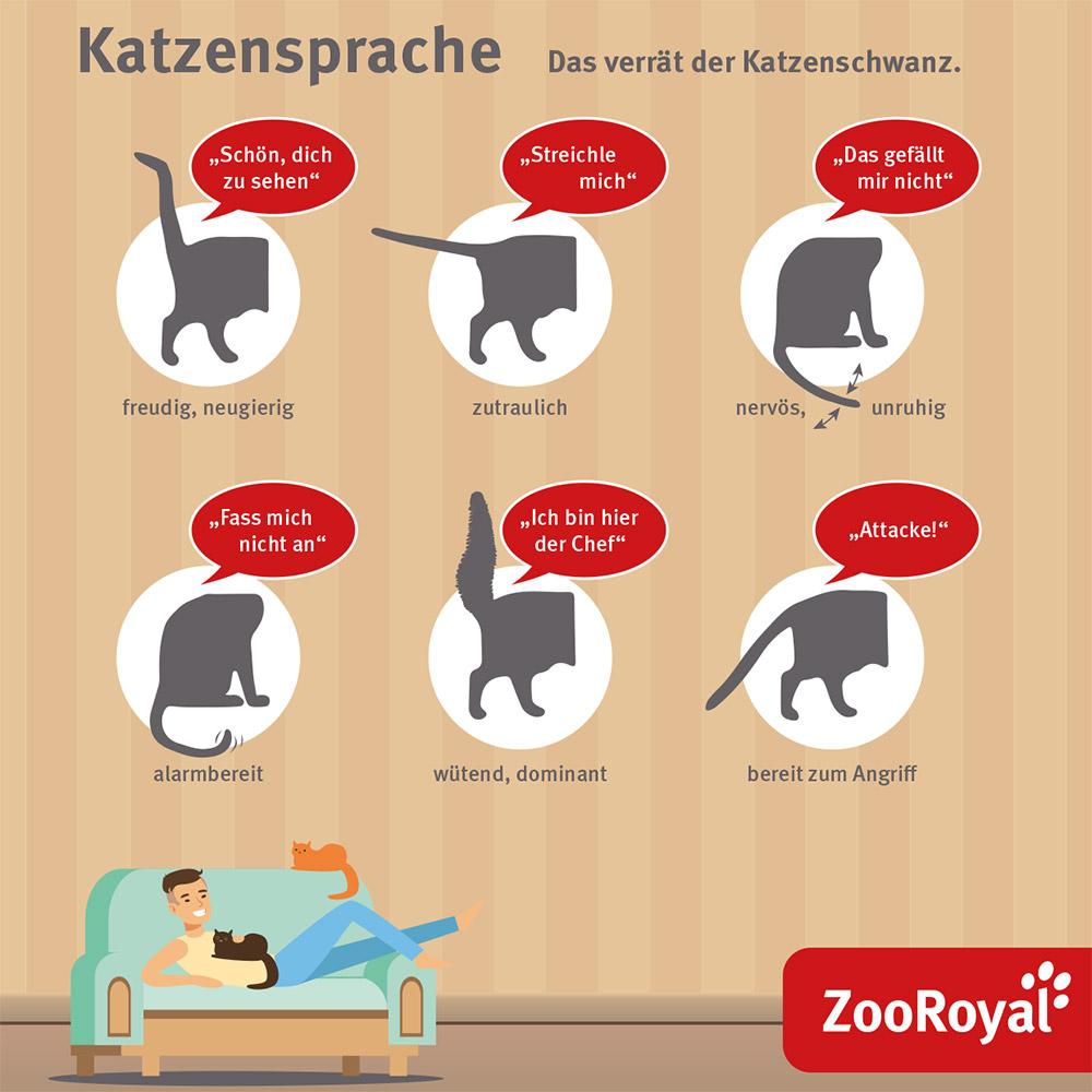 Katzensprache - das verrät der Katzenschwanz