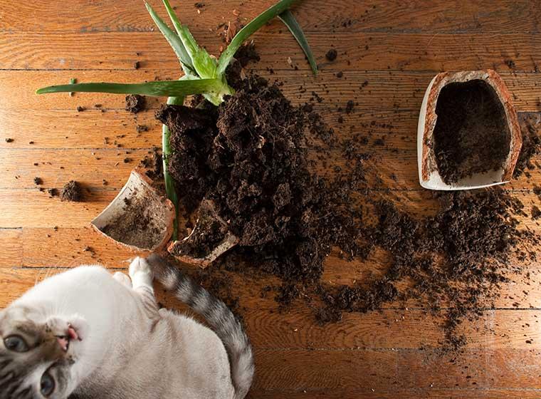 haftpflichtversicherung f r katzen zooroyal magazin. Black Bedroom Furniture Sets. Home Design Ideas