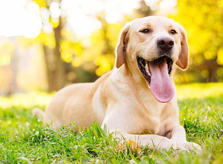 Tipps zur Abkühlung für Hunde