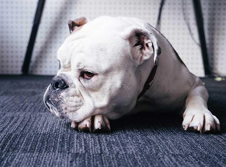 Hunde am Arbeitsplatz