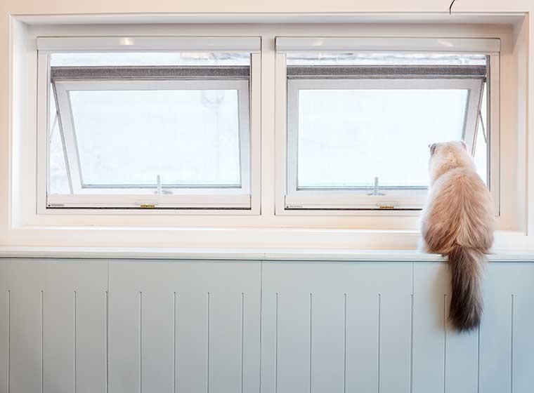 Kippfenster Katze