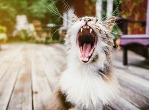 No Gos bei der Katzenerziehung