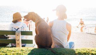 Langes Wochenende mit Hund