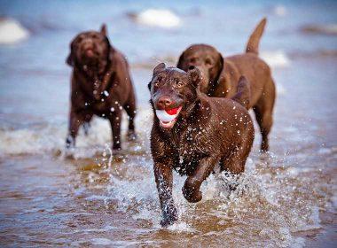 Spielspaß für Hunde im Sommer