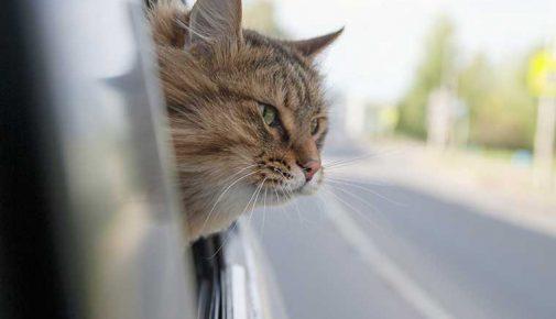 Urlaub mit Katze