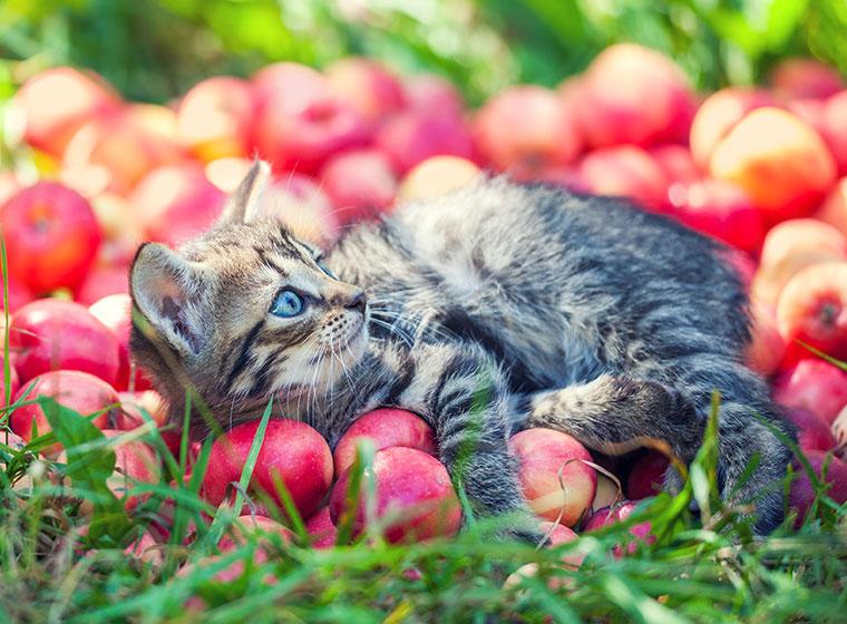 Superfood für die Katze