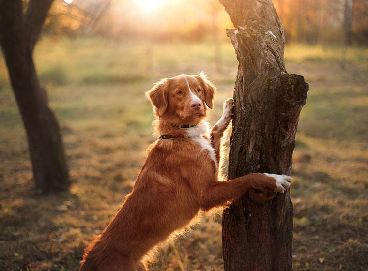 fährte legen für anfänger hund