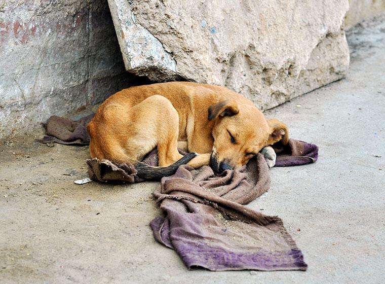 Hunde in Not - Straßenhund