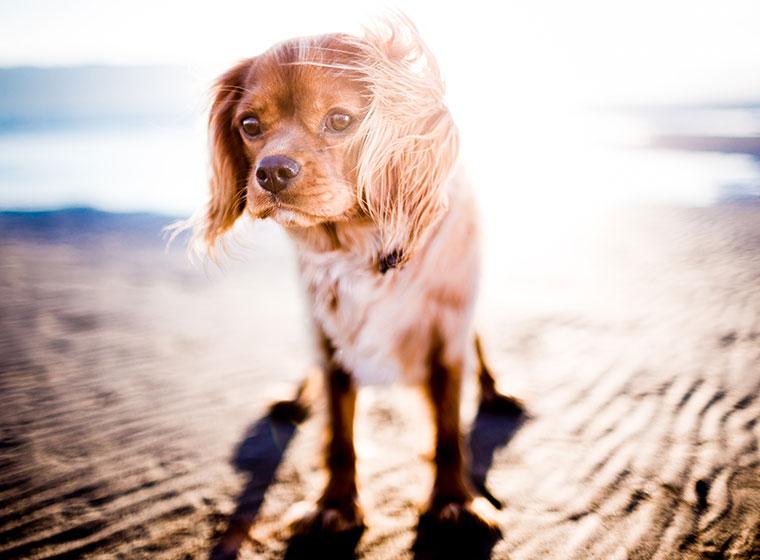 Reisekrankheiten beim Hund