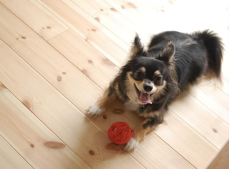 Spielideen für den Hund