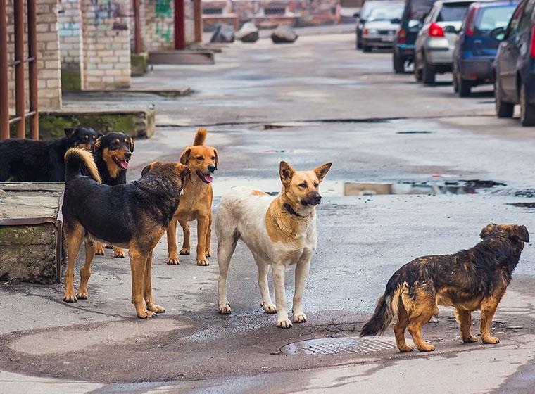 Hunde in Not