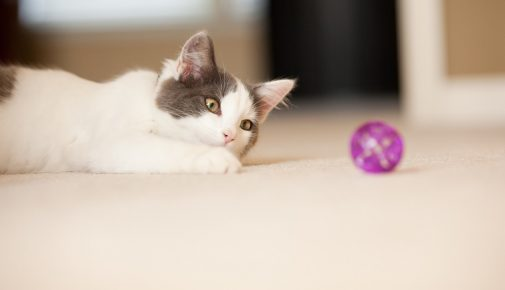 Katze zum Spielen animieren: Tipps & Tricks