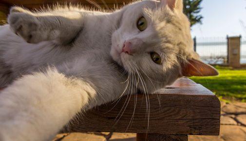 Berühmte Katzen