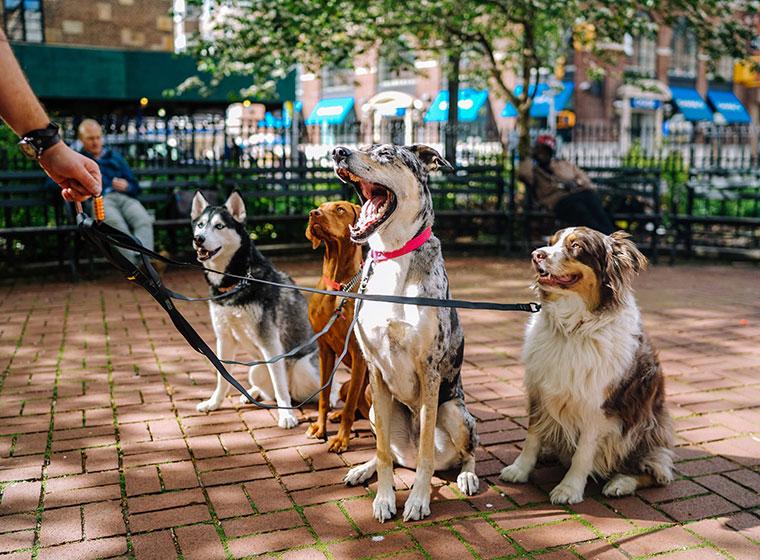Welthundetag Hundequiz