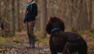 Unterwegs mit Hund: Checkliste für den Ausflug mit Hund