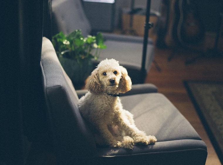 Wohnen mit Hund