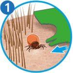 Zecke entfernen: Zeckenkarte Schritt 1