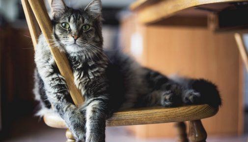 Neue Katze eingewöhnen