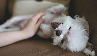 Hundepflege von Kopf bis Fuß