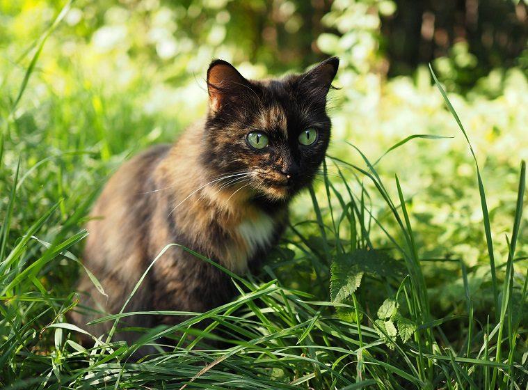 Katze eingewöhnen: der erste Freigang