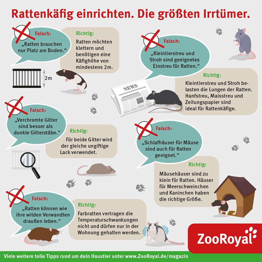 Rattenkäfig richtig einrichten