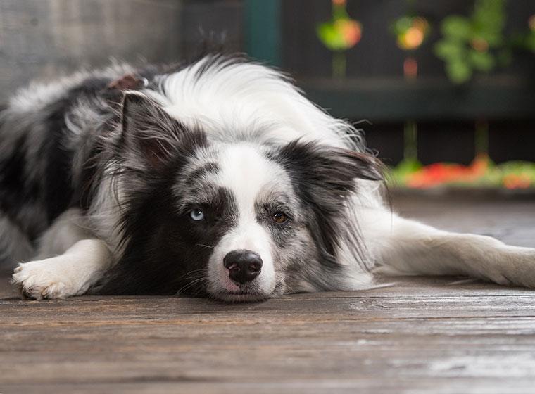 Mit Hund länger leben
