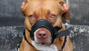 Wesenstest bei Hunden