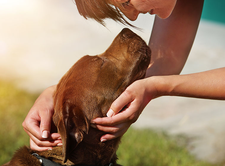 Mensch-Hund-Bindung
