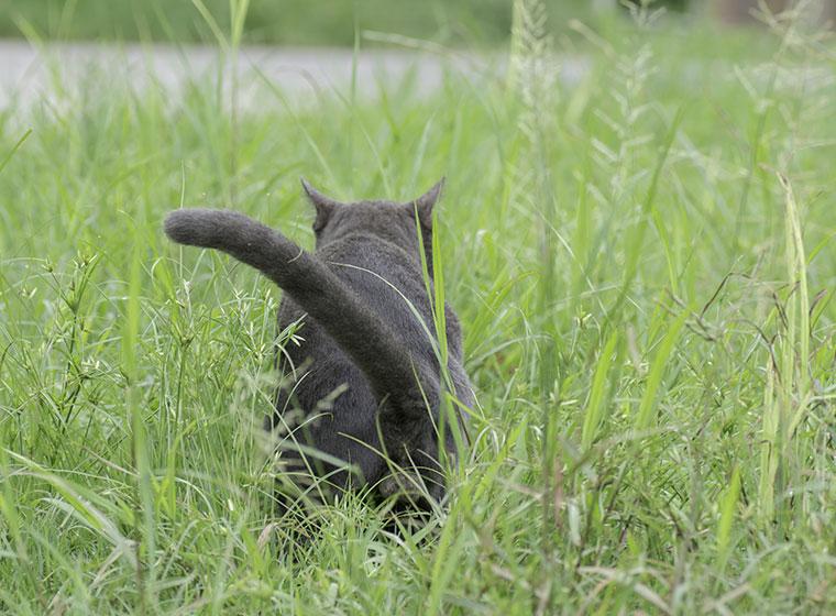 Harnmarkieren Katze