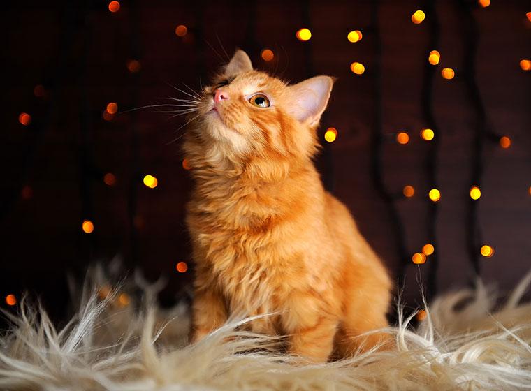 Silvester mit Katze