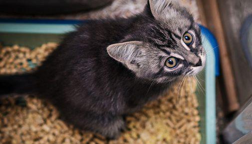Ist die Katze unsauber?