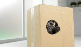 Katze und Karton