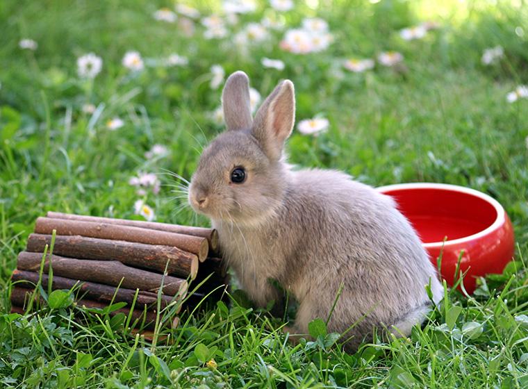 kaninchen besch ftigung spielzeug f r kaninchen zooroyal magazin. Black Bedroom Furniture Sets. Home Design Ideas