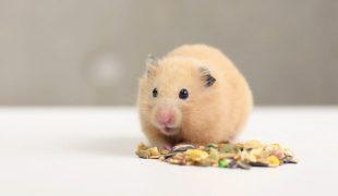 Artgerechtes Leben Hamster