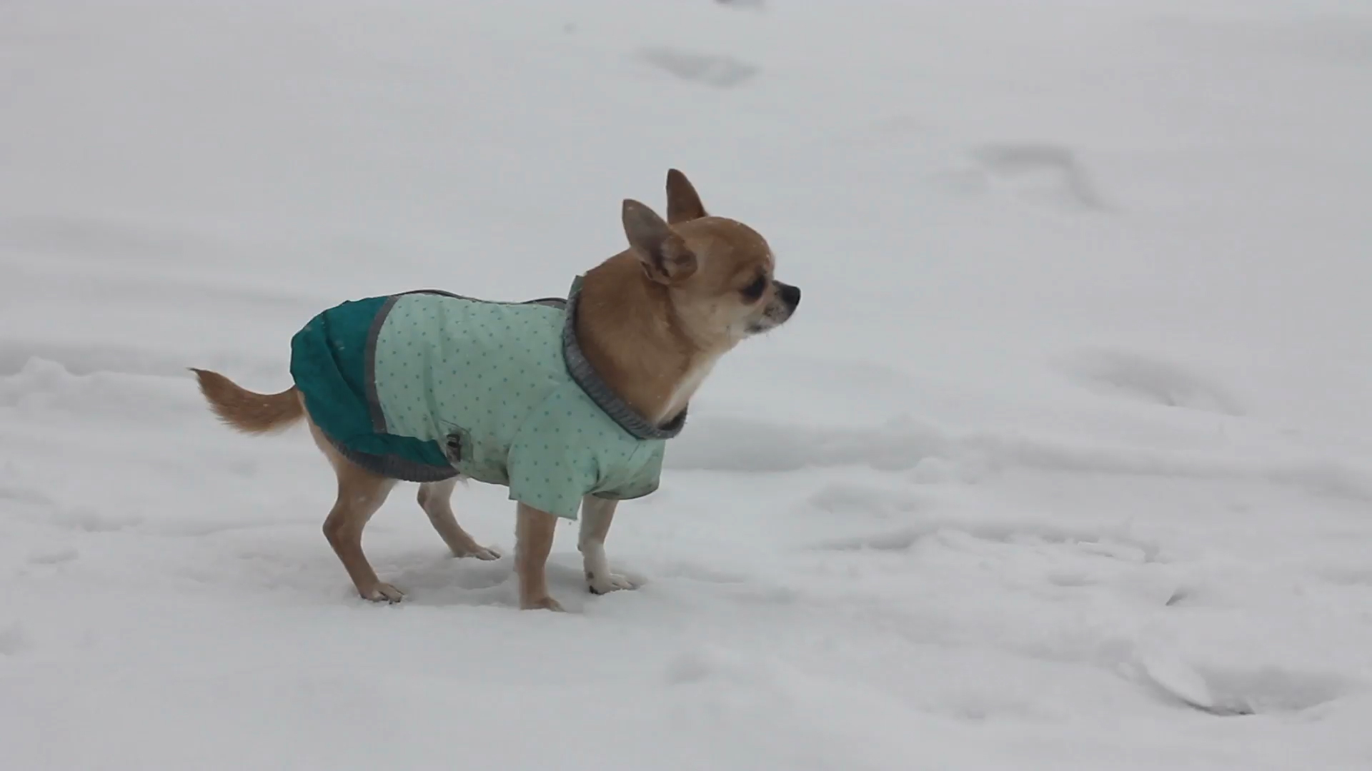 Hundemantel Ja Oder Nein Zooroyal Magazin