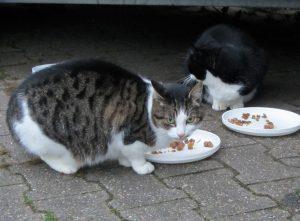 Streunerkatzen an Futterstelle