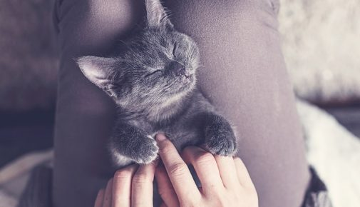 Katzenschlaf im Winter