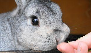 Kleintiere handzahm machen