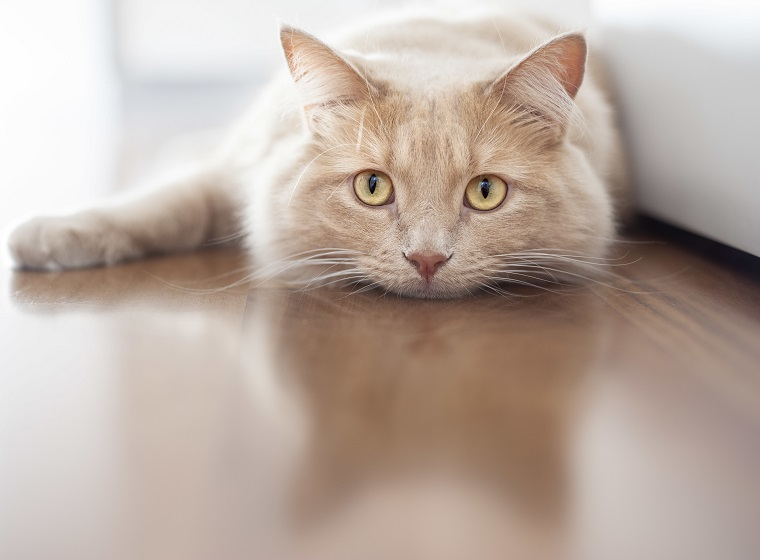 Einzelhaltung von Katzen