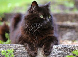 Katze unabhängig