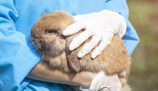 Kaninchen Impfung