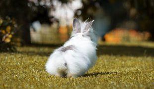 Kaninchen transportieren