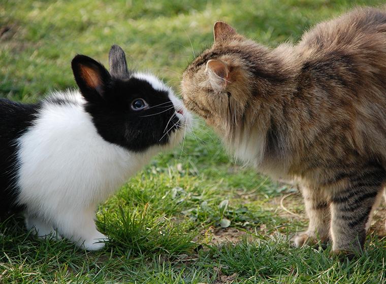 Kaninchen und Katze