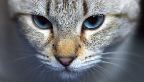 Katzenbiss und Katzenkratzer
