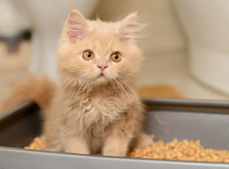 10 Fakten zur Katzentoilette