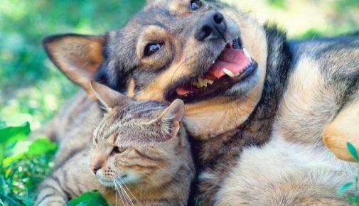 Haustiere machen glücklich