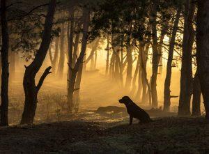 Wandertouren mit Hund