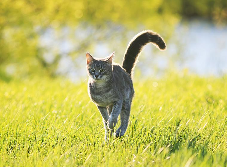Katzen An Draußen Gewöhnen